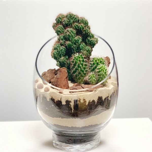 The Desert Cactus Planter