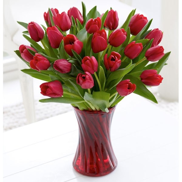 Dazzling Red Tulips